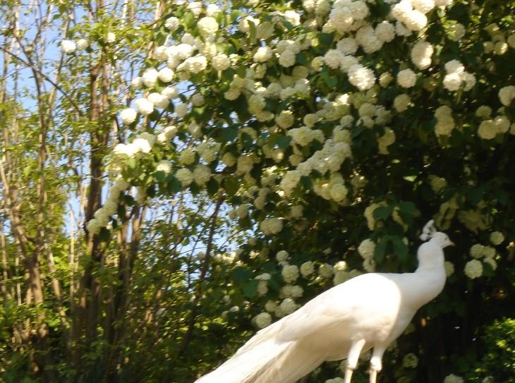 The Angel's Garden